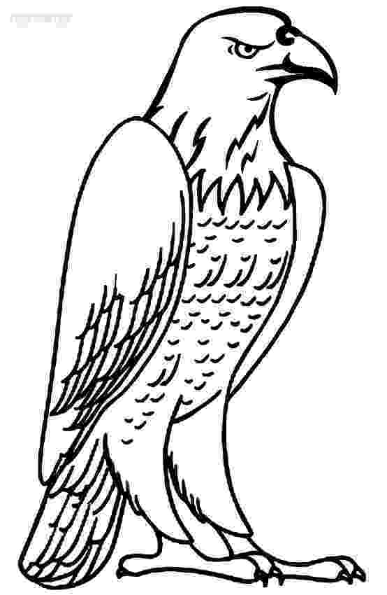 bald eagle pictures to color free printable bald eagle coloring pages for kids color to eagle bald pictures