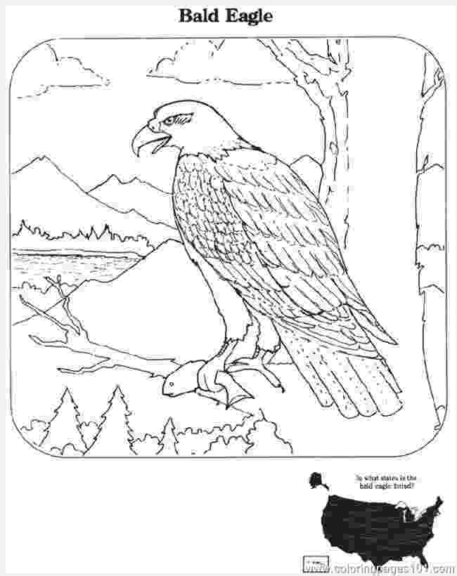 bald eagle pictures to color free printable bald eagle coloring pages for kids eagle color pictures bald to