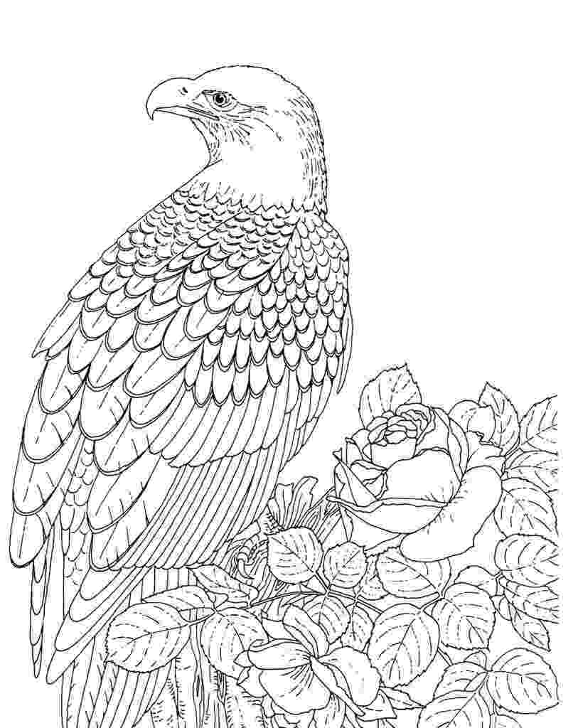 bald eagle pictures to color free printable bald eagle coloring pages for kids eagle pictures to bald color