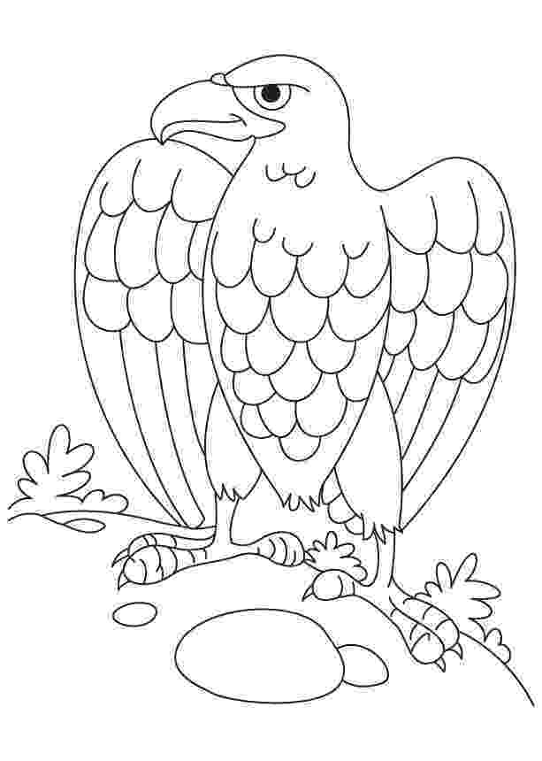 bald eagle pictures to color printable bald eagle coloring pages for kids cool2bkids color bald pictures to eagle