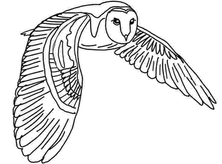 barn owl coloring pages printable barn owl coloring page color me owl coloring pages coloring owl printable pages barn