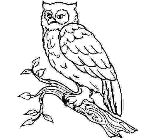barn owl coloring pages printable barn owl coloring page coloringcrewcom barn printable coloring owl pages