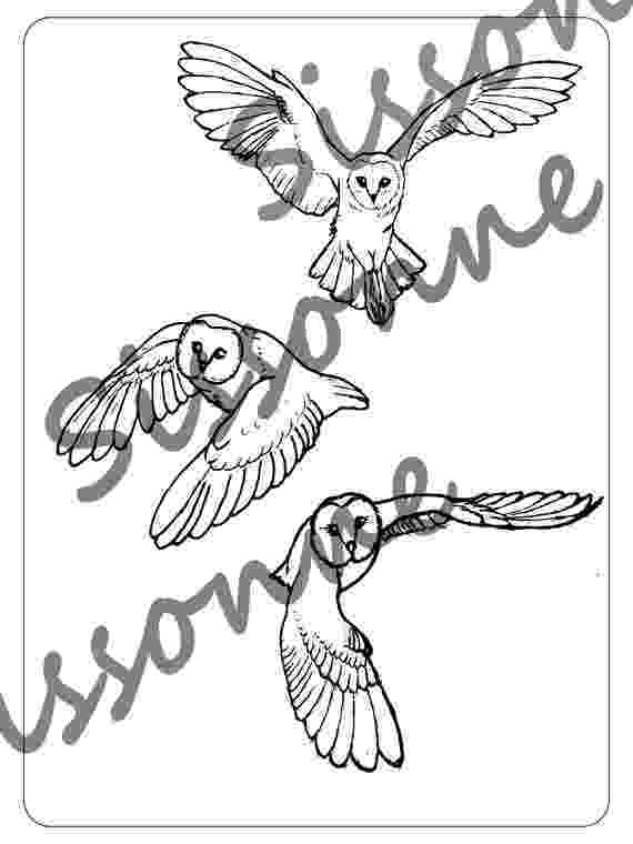barn owl coloring pages printable barn owl coloring page printable pages barn owl coloring