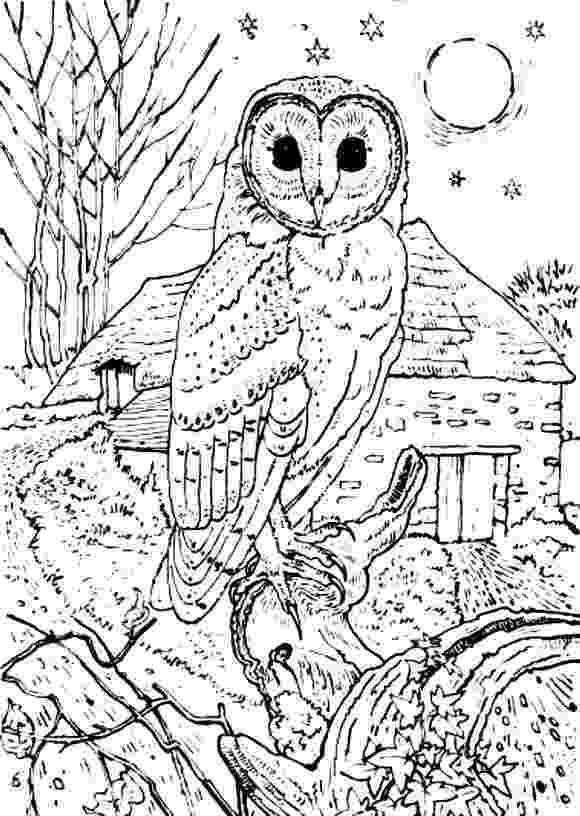 barn owl coloring pages printable barn owl colouring page colouring owl coloring pages barn printable pages owl coloring
