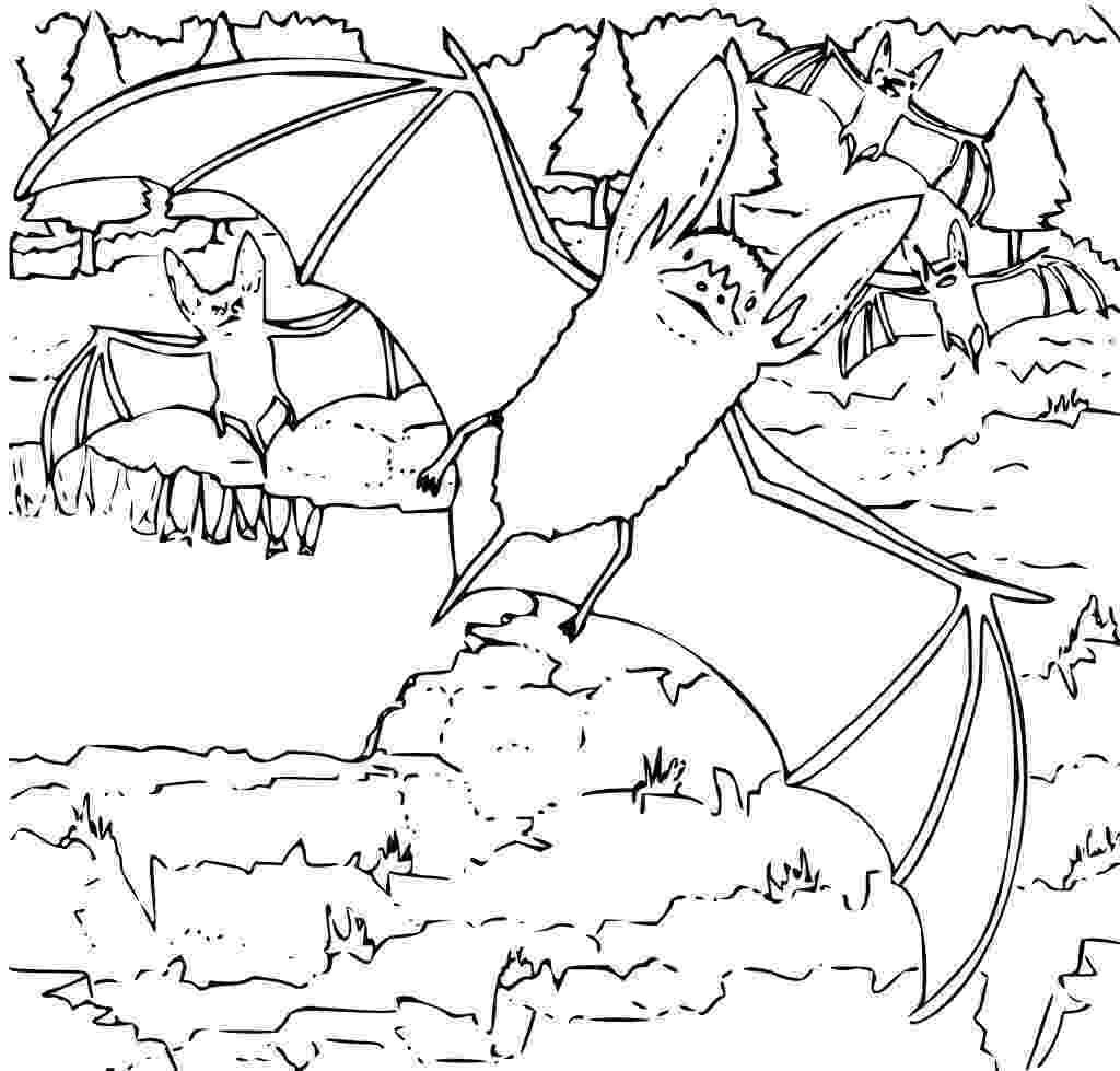 bats coloring pages free printable bat coloring pages for kids bats pages coloring 1 1