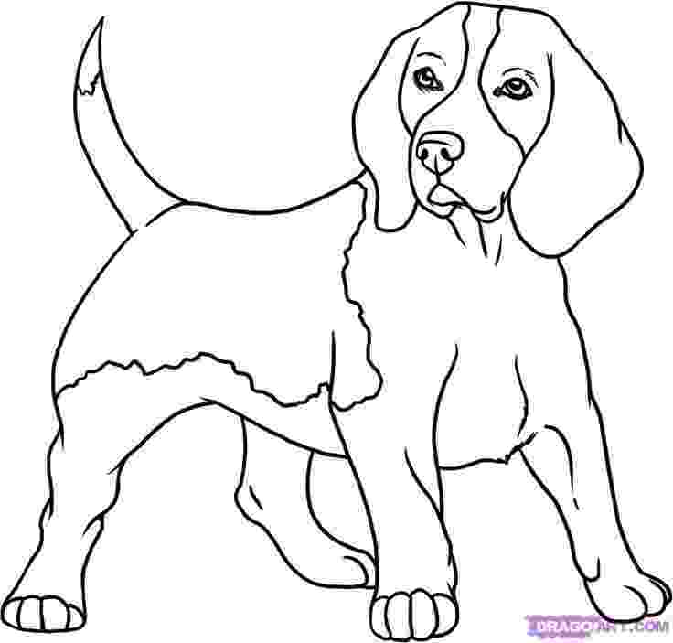 beagle coloring pages beagle dog coloring page free printable coloring pages beagle pages coloring