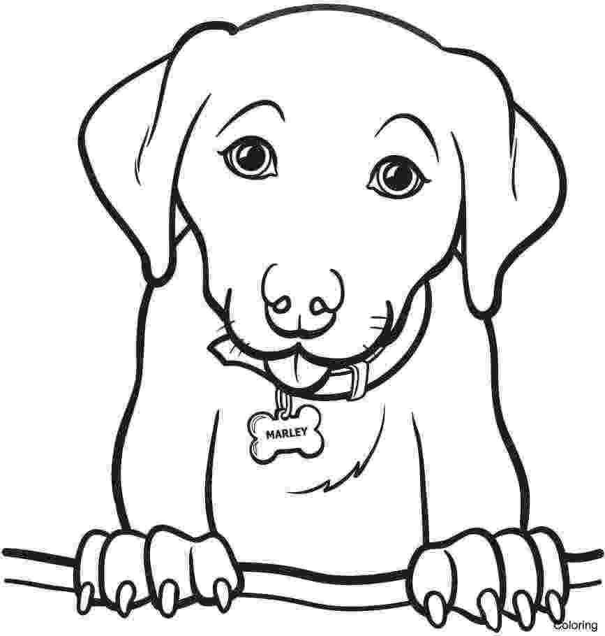 beagle coloring pages beagle dog coloring pages at getcoloringscom free coloring pages beagle