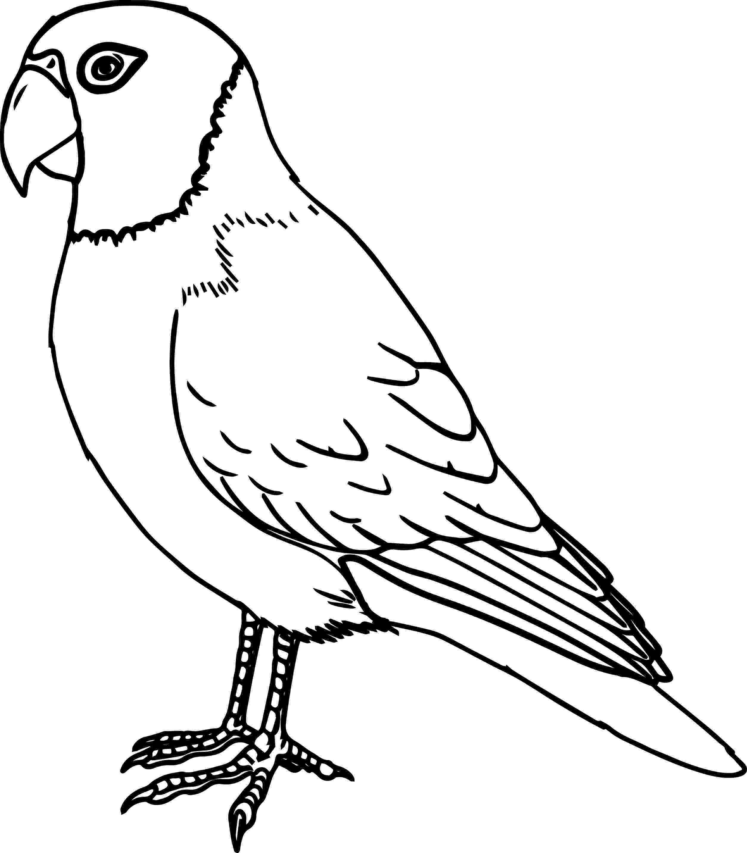 bird coloring bird coloring pages coloring bird 1 2