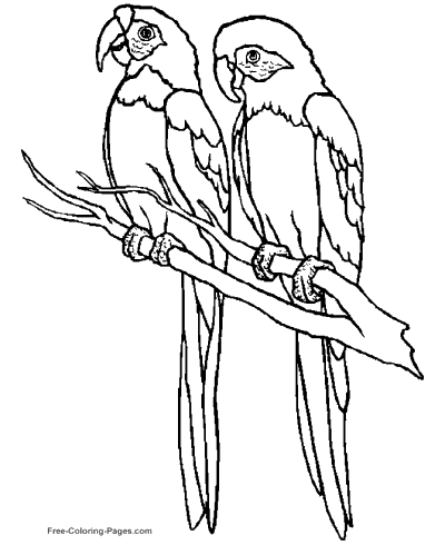 bird coloring images bird coloring pages getcoloringpagescom coloring bird images