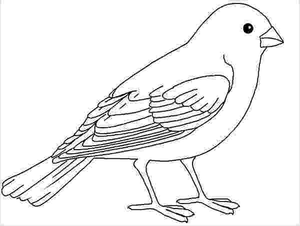 bird coloring images free bird outline drawing download free clip art free bird coloring images