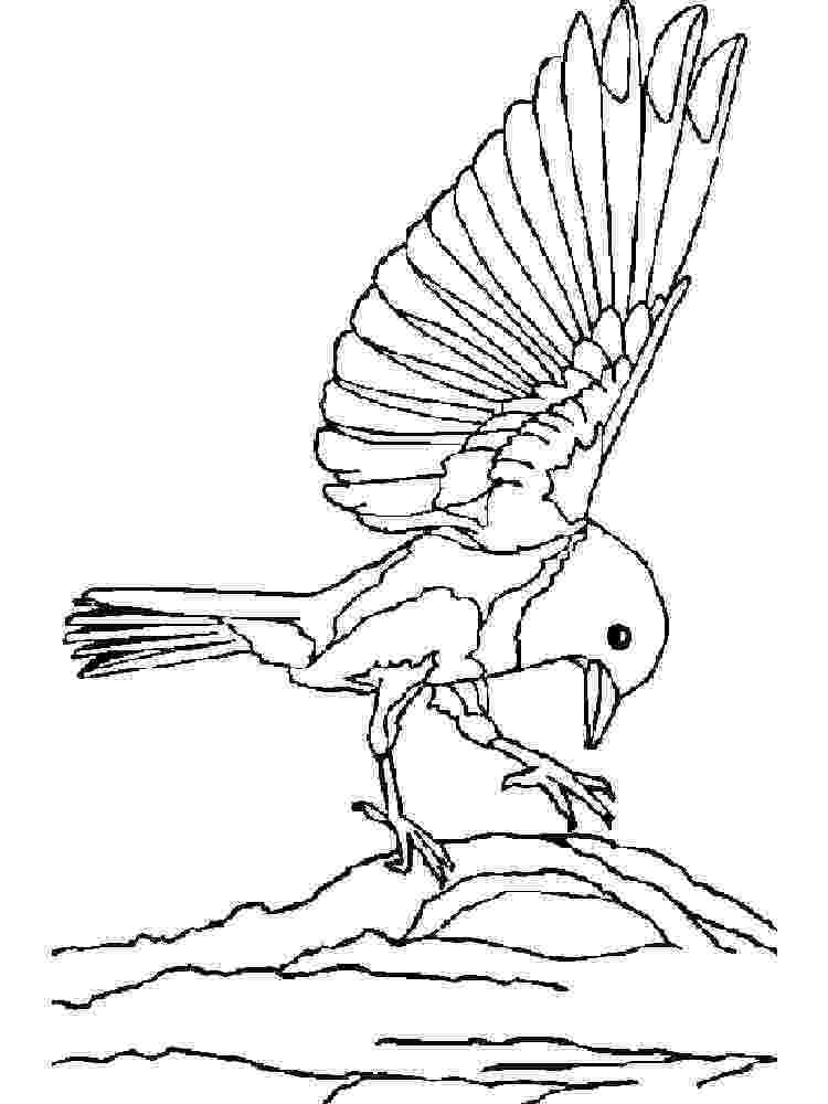 bird coloring line art coloring page bird with blossoms the bird coloring