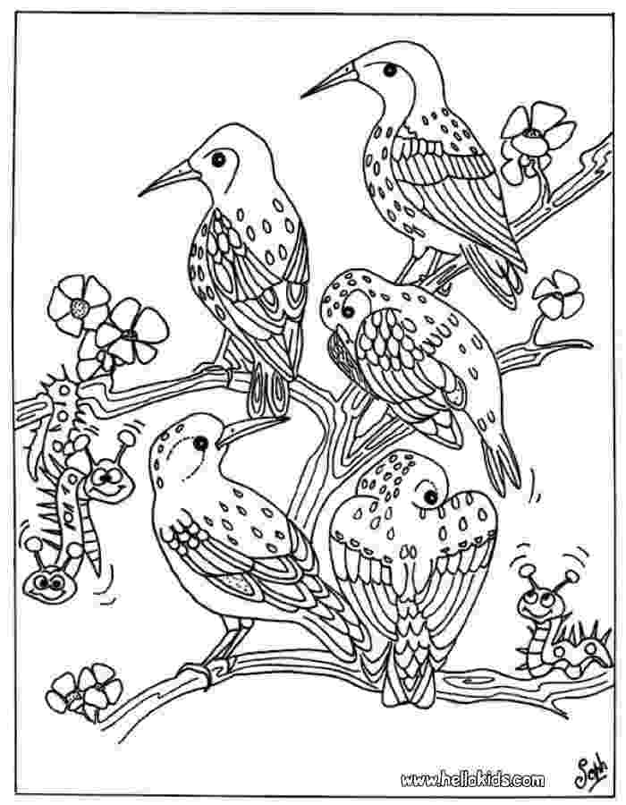 bird coloring pages free bird group coloring pages hellokidscom coloring bird pages free