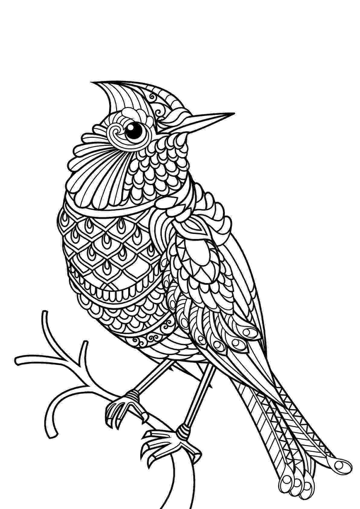 bird coloring pages to print blue jay bird coloring page free printable coloring pages bird to coloring print pages