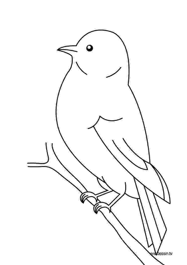 birds to color cute bird coloring pages hellokidscom birds color to