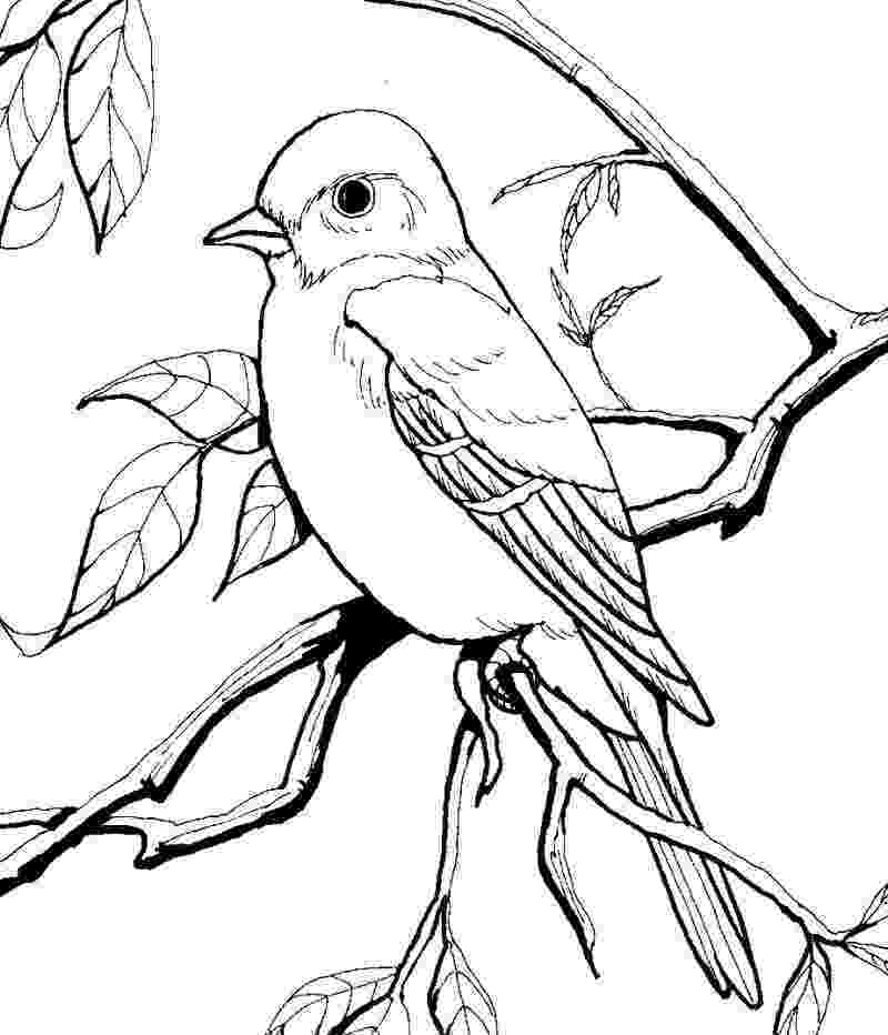 birds to color line art coloring page bird with blossoms the birds color to