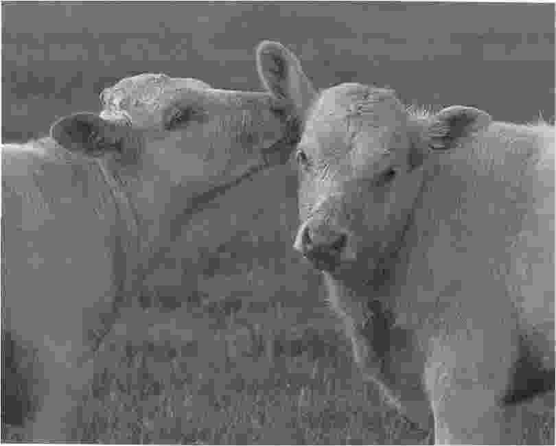 black and white animal pictures to color all animals coloring pages download and print for free to and black color pictures white animal