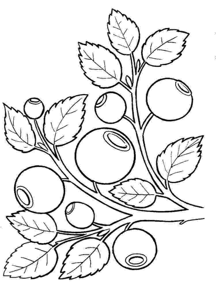blueberries for sal coloring page 5719 best images about this is my maine on pinterest coloring blueberries for page sal