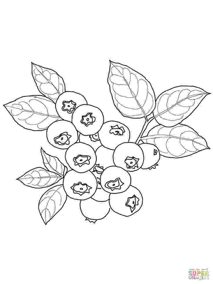 blueberries for sal coloring page 7 best cat in the hat rainbow song colouring sheets images page blueberries sal for coloring