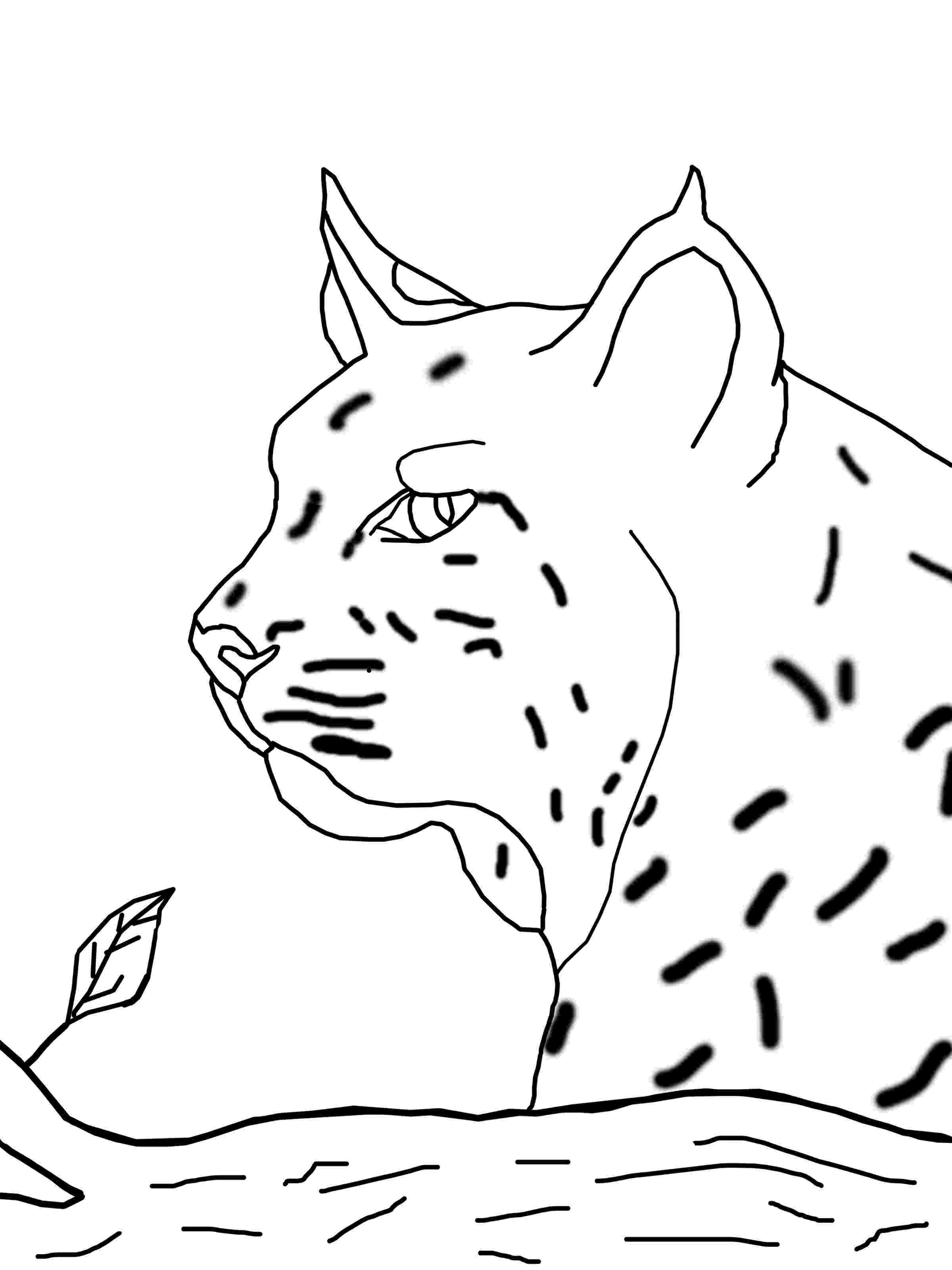 bobcat coloring pictures bobcat coloring pages to download and print for free coloring bobcat pictures