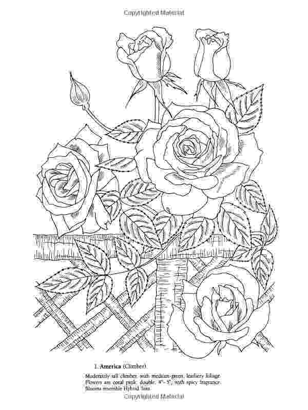 botany coloring book download floral design m02csf drawing cut flowers clip art png coloring book download botany