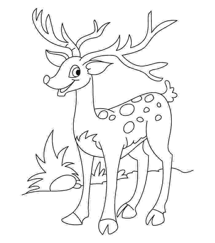 buck coloring pages 45 deer templates animal templates free premium coloring buck pages