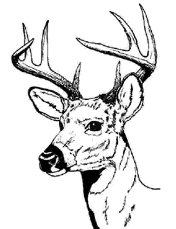 buck coloring pages bucks free coloring pages pages buck coloring 1 1