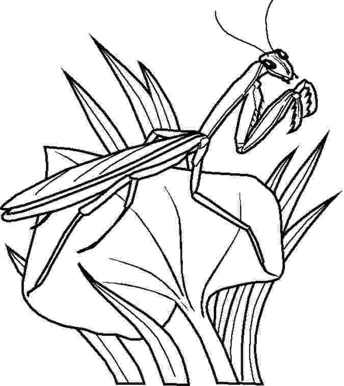 bugs colouring pages free printable bug coloring pages for kids bugs colouring pages