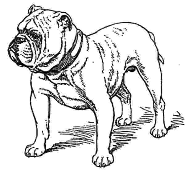 bulldogs coloring pages bulldog drawing easy at getdrawingscom free for bulldogs pages coloring