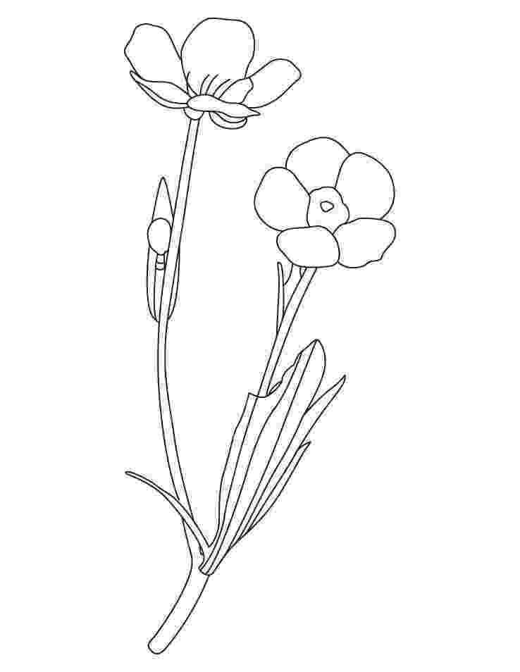 buttercup coloring pages buttercup flower coloring pages download and print pages coloring buttercup