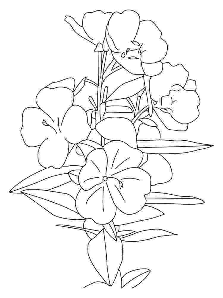 buttercup coloring pages powerpuff girls buttercup coloring page h m coloring pages buttercup pages coloring