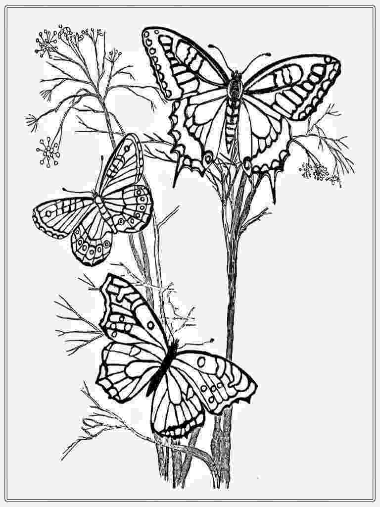 butterflies to color free free printable butterfly coloring page ausdruckbare color butterflies to free