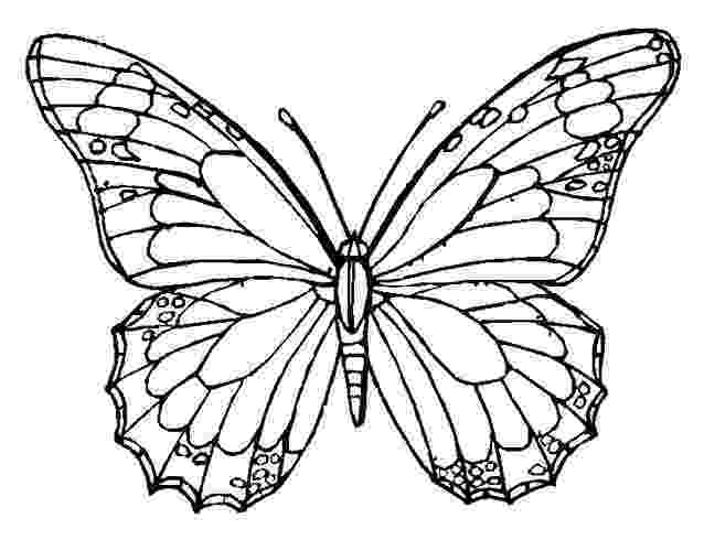 butterfly pictures to color and print coloring pages for adults pdf free download to and pictures print butterfly color