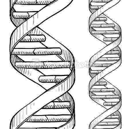cadena de adn dibujo dna double helix sketch doodle style genetic dna triple cadena dibujo adn de