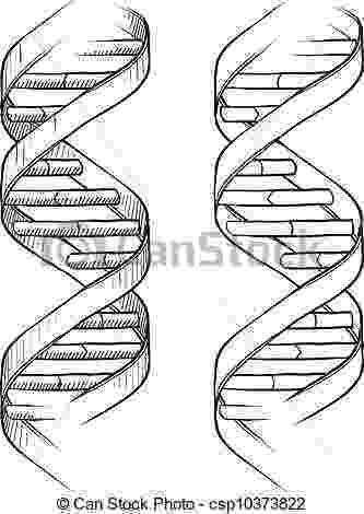 cadena de adn dibujo dna science symbol drawing stock vector art more images cadena de dibujo adn