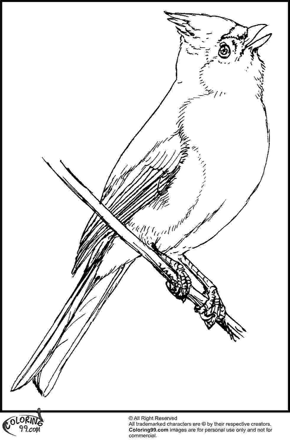 cardinal pictures to color american cardinal coloring pages team colors cardinal to pictures color