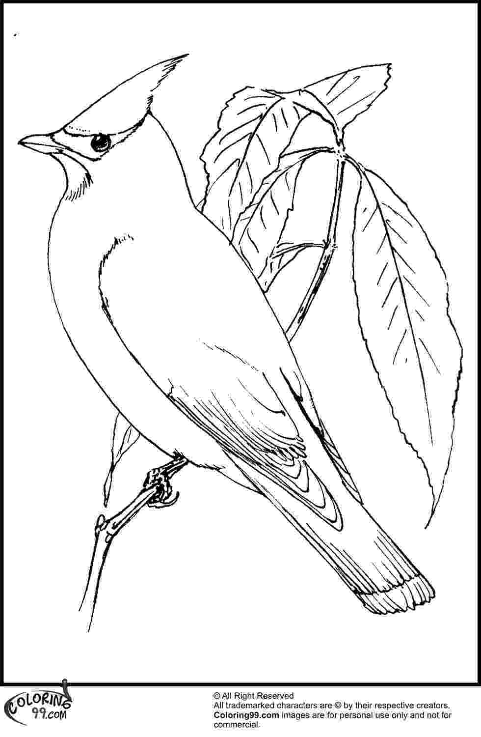 cardinal pictures to color american cardinal coloring pages team colors to cardinal pictures color