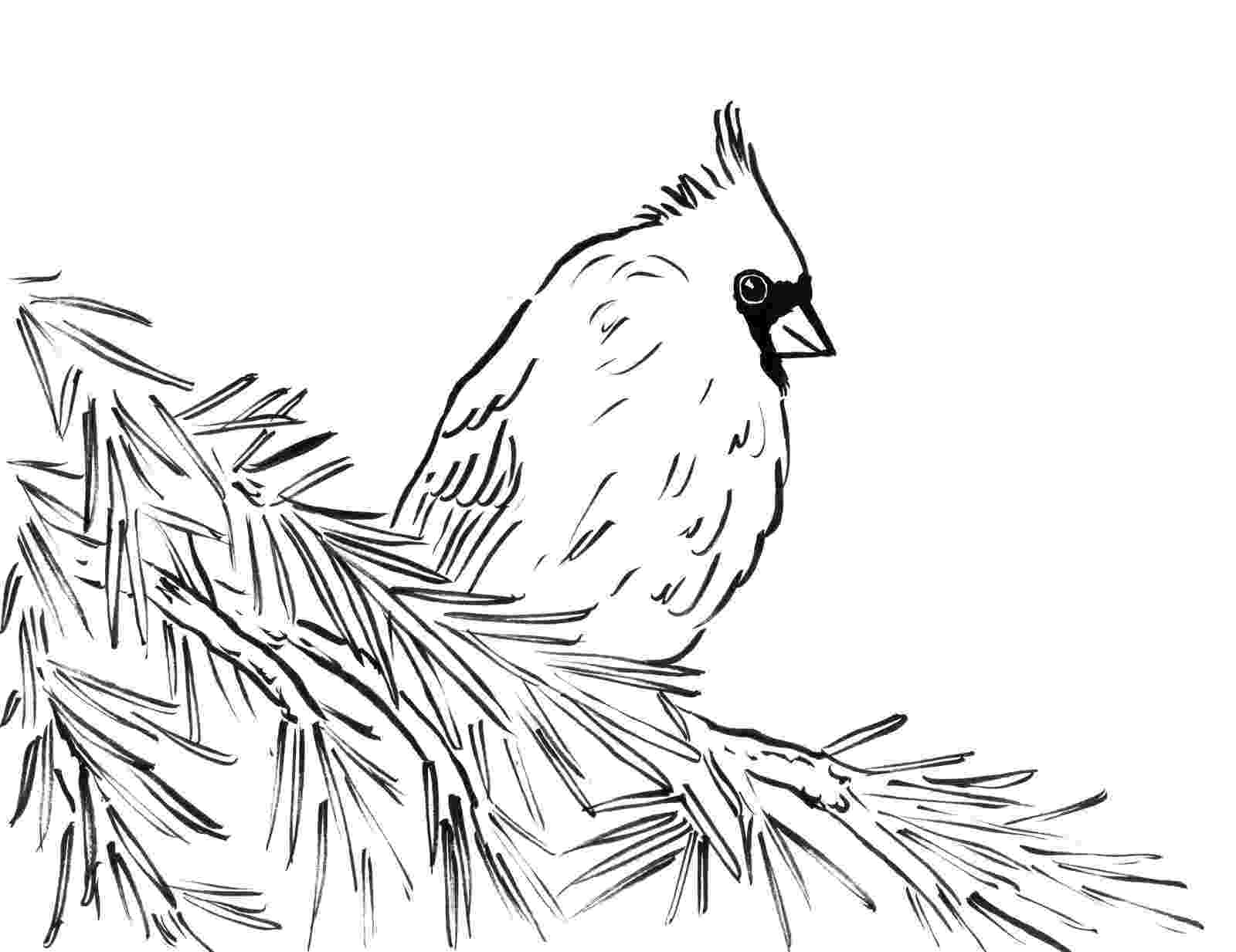 cardinal pictures to color cardinal coloring sheet classroom pinterest color pictures cardinal to