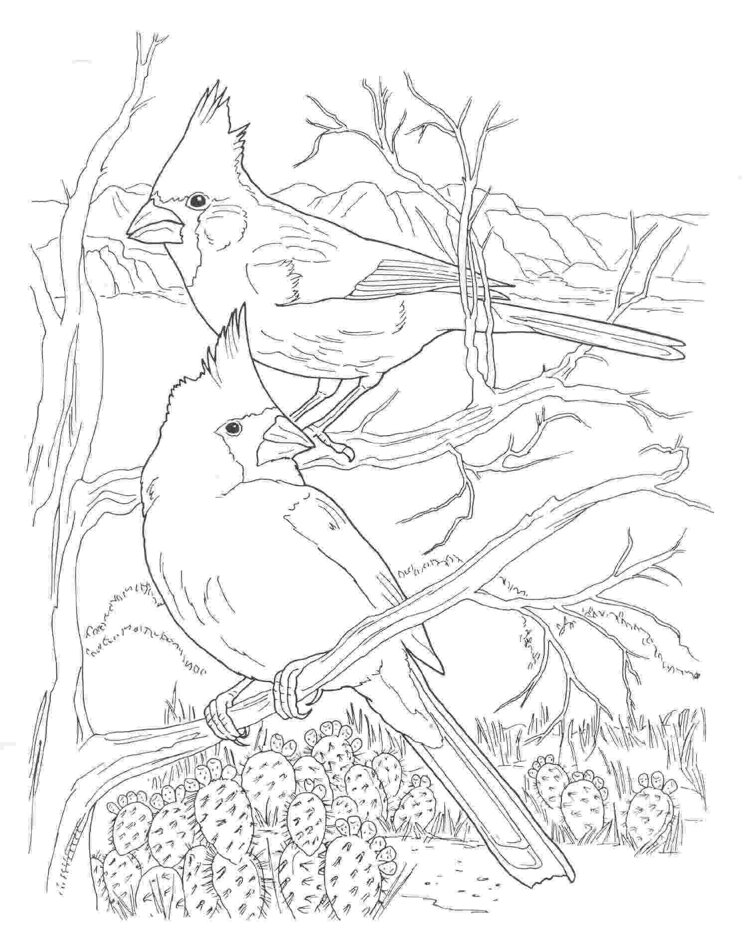 cardinal pictures to color cardinal drawing at getdrawingscom free for personal cardinal color pictures to