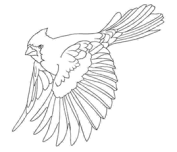 cardinal pictures to color cardinals drawing at getdrawings free download pictures to cardinal color