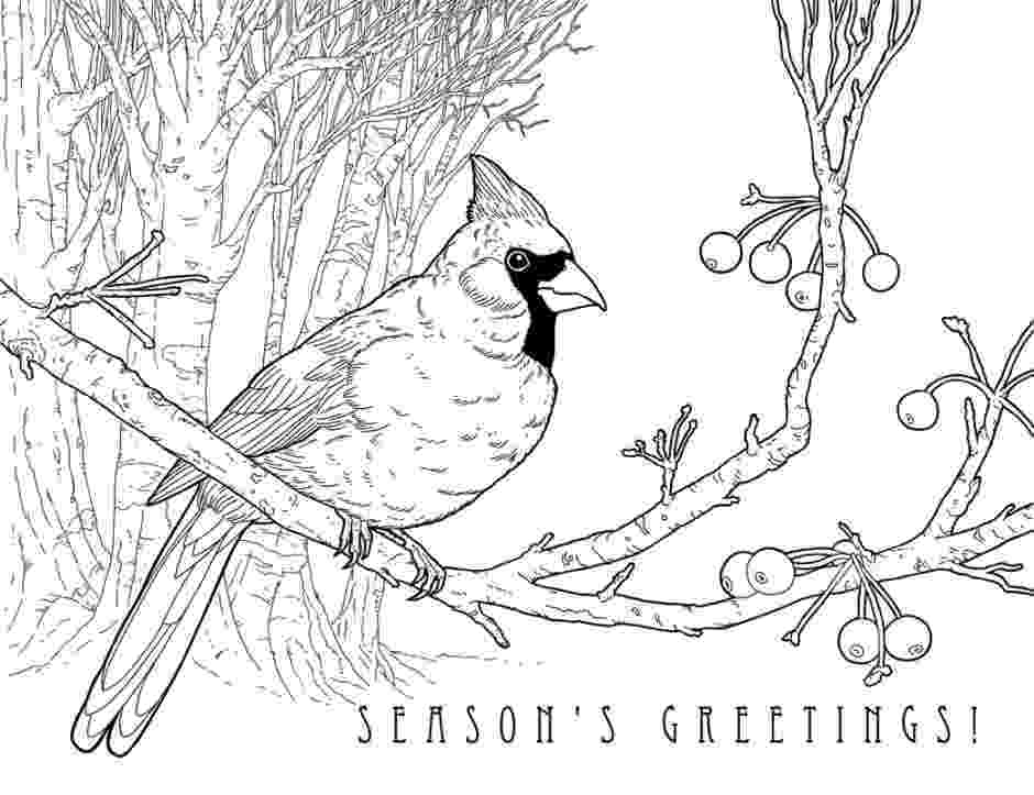 cardinal pictures to color high detailed beautiful cardinal coloring page color pictures to cardinal