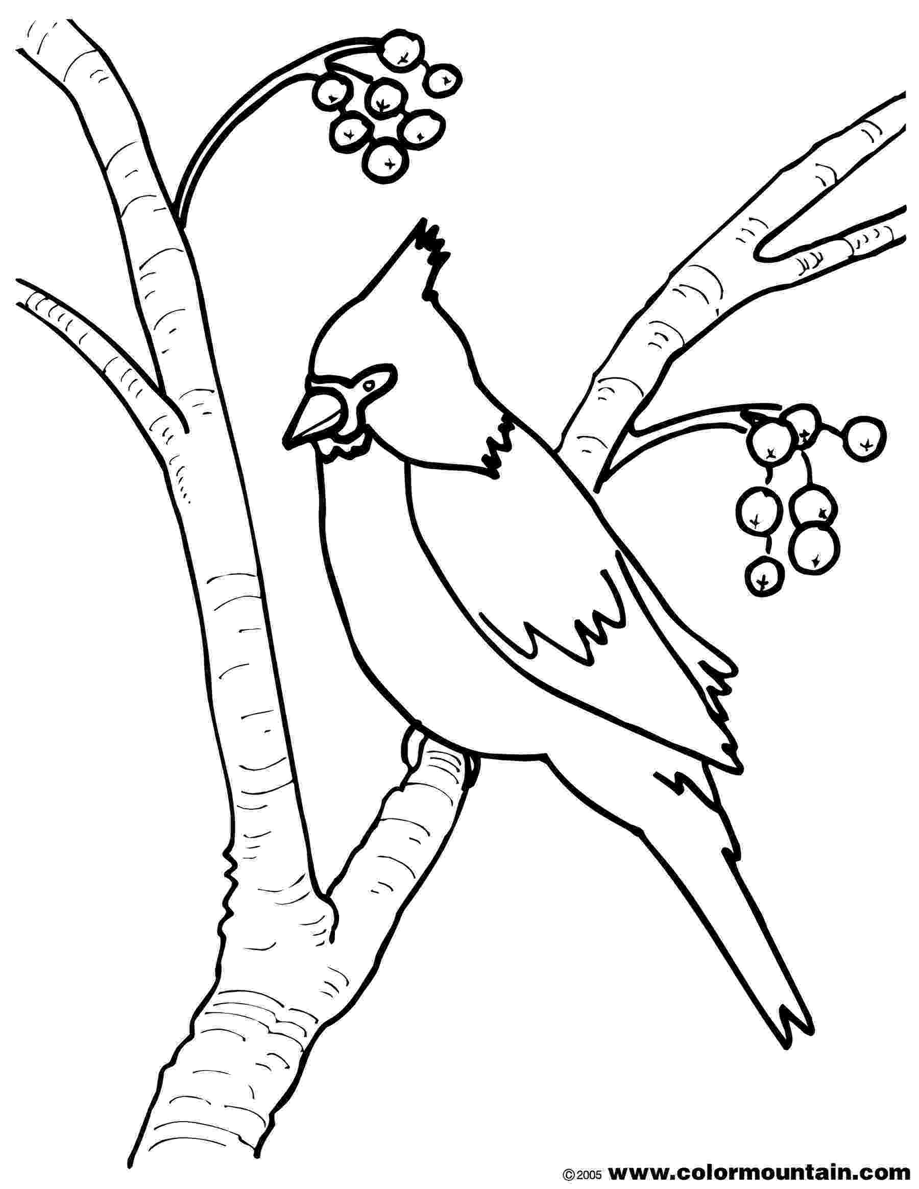 cardinal pictures to color tpwd kids cardinal and painted bunting to cardinal pictures color