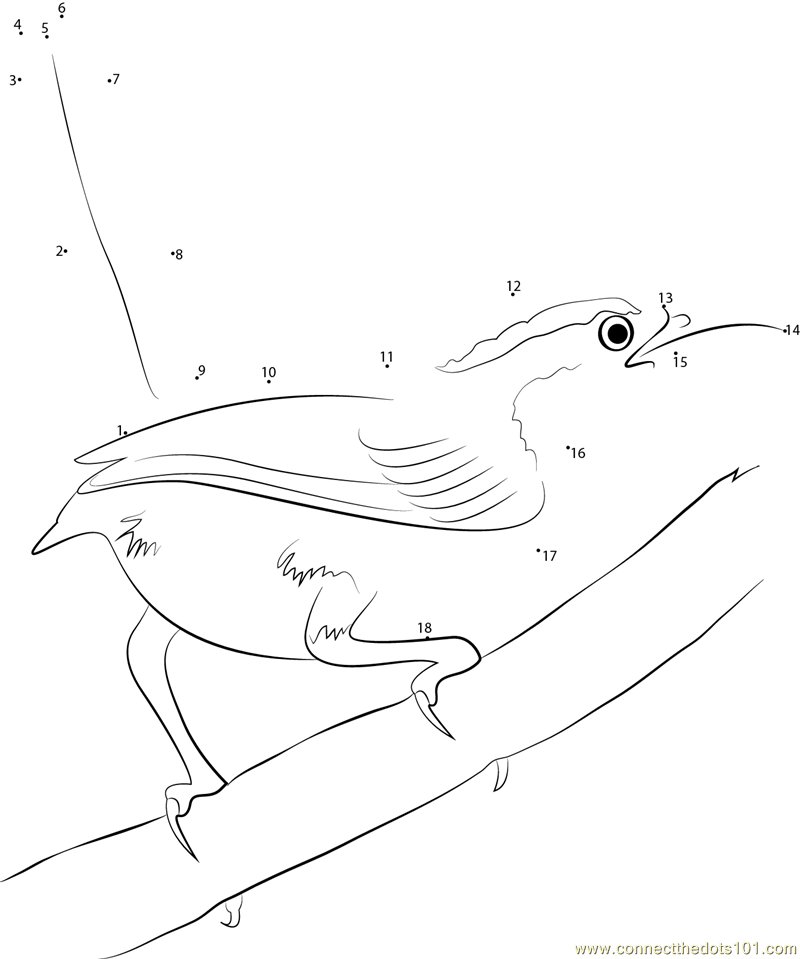 carolina wren coloring page rufous breasted wren bird build a nest coloring page wren carolina coloring page
