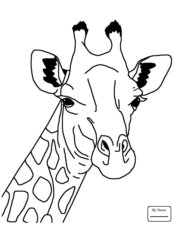 cartoon giraffe best baby giraffe illustrations royalty free vector giraffe cartoon
