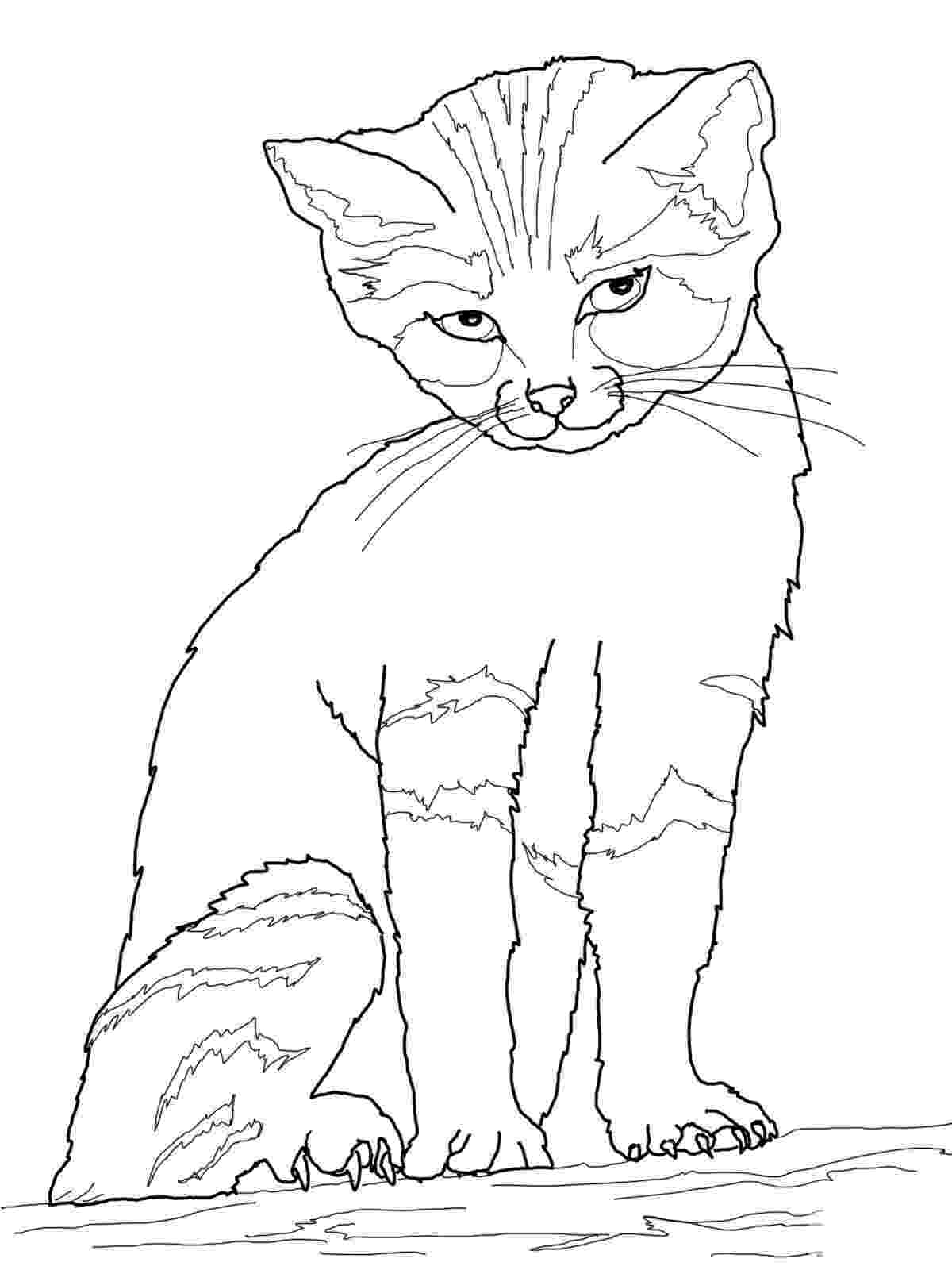 cat coloring pages coloring pages cats and kittens coloring pages free and coloring cat pages