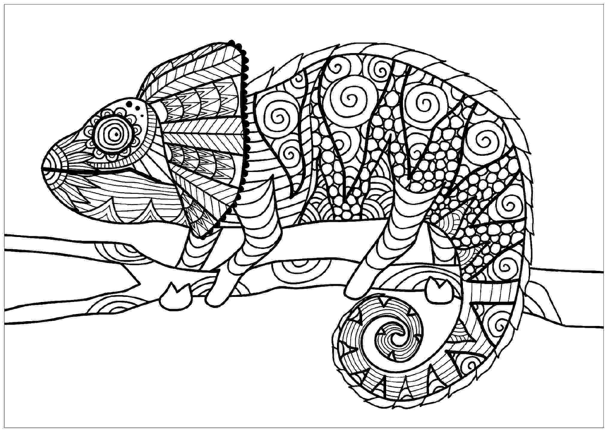 chameleon coloring pages chameleon coloring pages best coloring pages for kids chameleon coloring pages