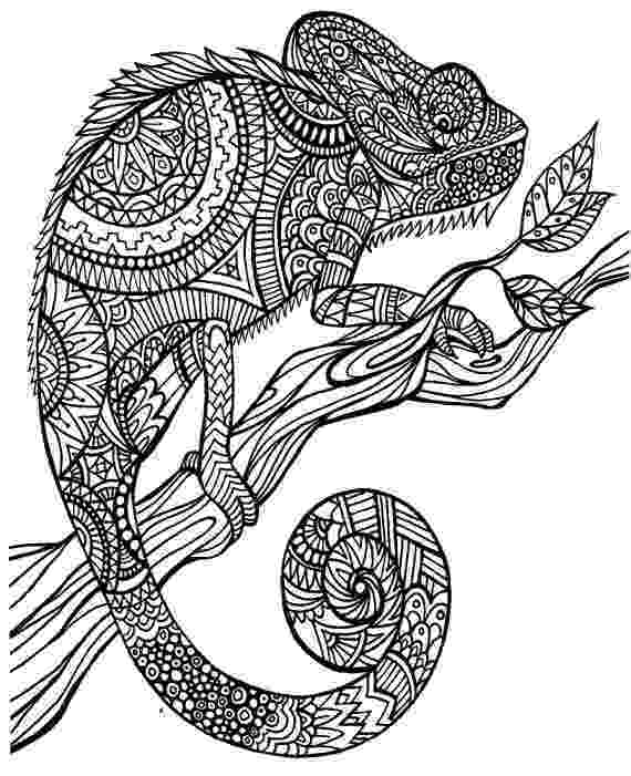 chameleon coloring pages chameleon coloring pages to printable coloring pages chameleon