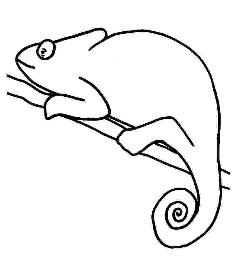 chameleon coloring pages chameleon coloring pages to printable pages chameleon coloring