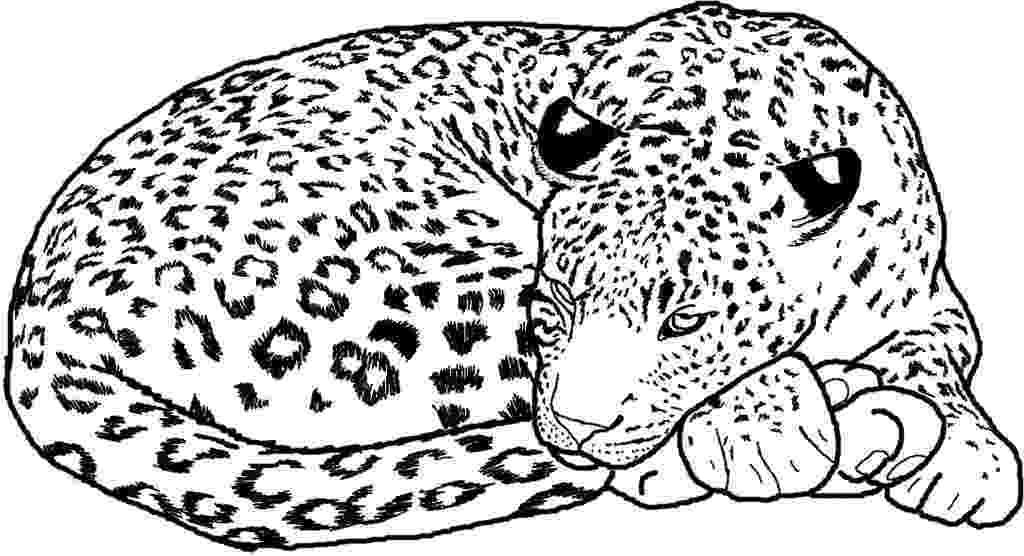 cheetah coloring page cheetah coloring pages 360coloringpages page cheetah coloring