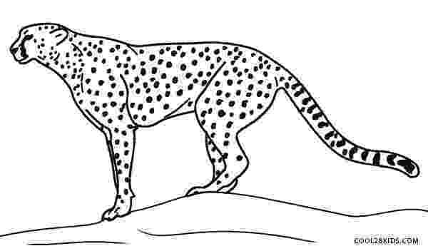 cheetah coloring page cheetah free printable templates coloring pages cheetah page coloring