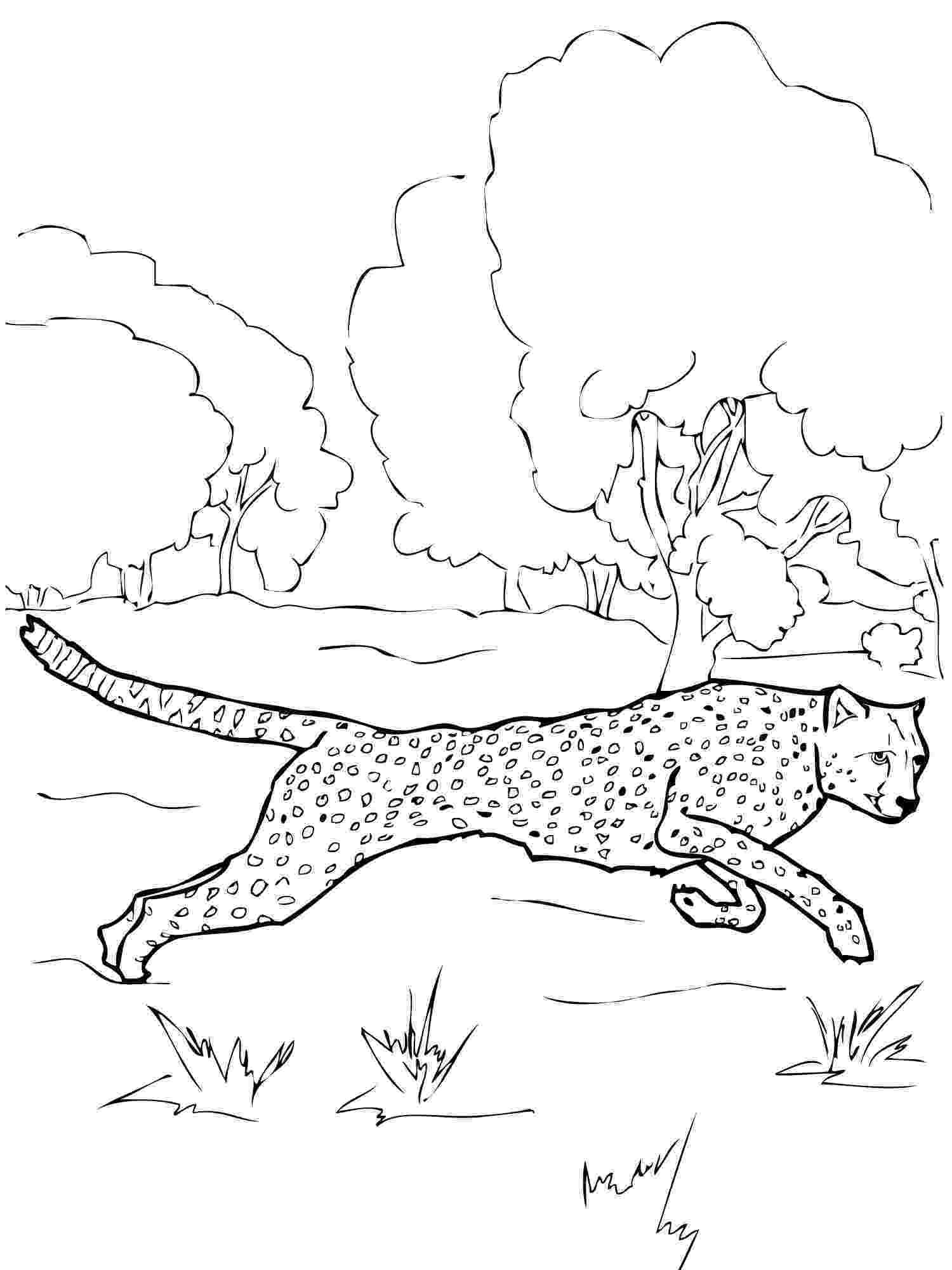 cheetah coloring page free cheetah coloring pages cheetah coloring page